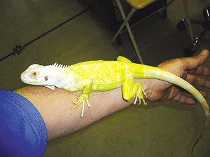 大学生养蜥蜴当宠物吓跑两室友(组图)