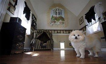 美国女子狂掷2万美元为宠物狗建造豪宅(组图)