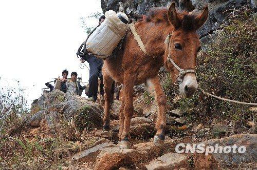图:广西山村旱区人挑马驮翻山越岭运水