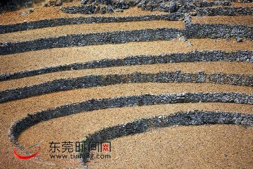 """组图:广西河池因干旱""""死""""去的梯田"""