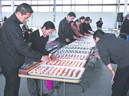 多伦多逾400藏民举行祈福法会 为青海灾民祈福
