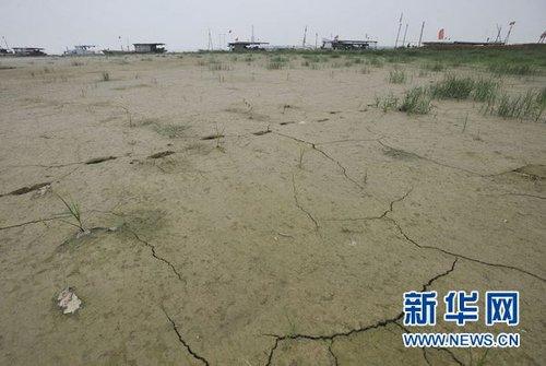 中部产粮大省安徽面临50年来罕见干旱考验
