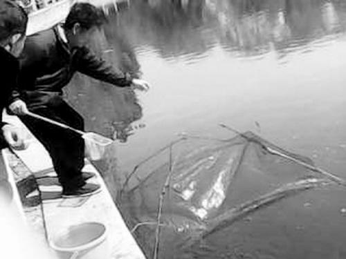 好心人公园湖边放生鱼苗 引来无数垂钓下网者