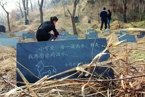 陕西豪华宠物墓地身价近4万 下葬让小狗哭灵