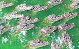 南京千条鳄鱼浮出水面引猜测