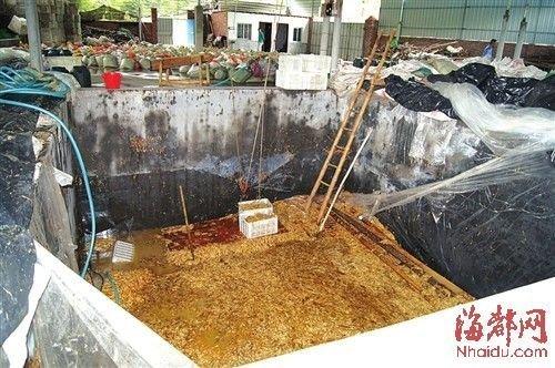 在这个数十平方米的大池子里,黑心商家用工业柠檬酸泡出了35吨金针菇。