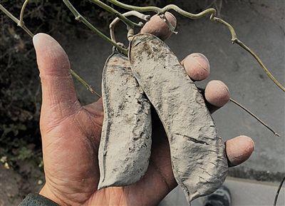 广西合浦采石场将海岸挖出巨坑 红树林被掩埋