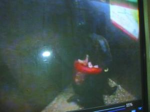 高清图—29岁女老师兰州市临夏路天安大厦10楼电梯内遭割喉