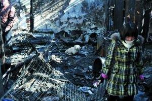 北京什刹海丁奶奶家中失火 约150只猫被烧死