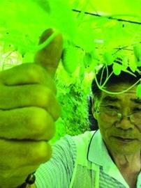 """拇指般大小""""西瓜""""在上海培育成功 可连皮一起吃"""