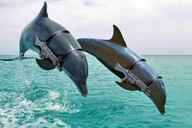 """俄海军新添""""海豚战士"""""""