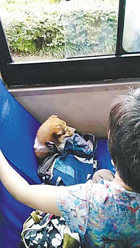 大妈早高峰公交为狗刷卡占座 称替狗刷卡就该坐