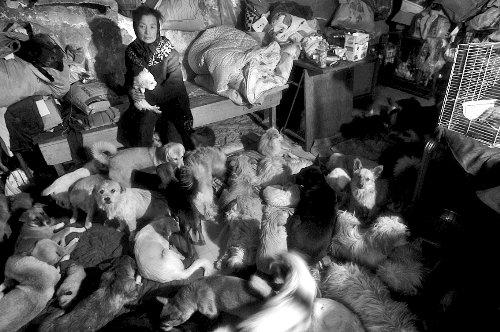 老太18年养600多流浪猫狗 同吃同住每月花6万