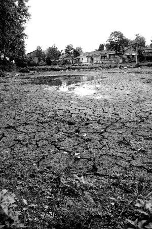 千湖之省湖北遭遇大旱 洪湖已不见浪打浪(图)