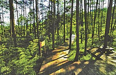 贵州国家森林公园改建高尔夫球场 2万亩山林被毁