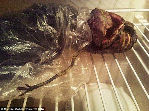"""俄罗斯女性2009年在""""飞碟坠毁现场""""发现了一具""""外星人""""尸体,并将其带"""