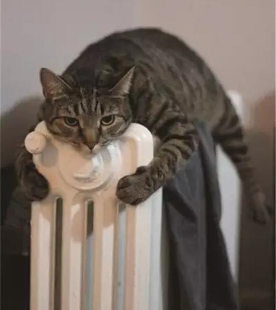 其实暖气片是一个万能的神器