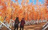 春节为吸引游客 一景区花300万为万株树木装假树叶