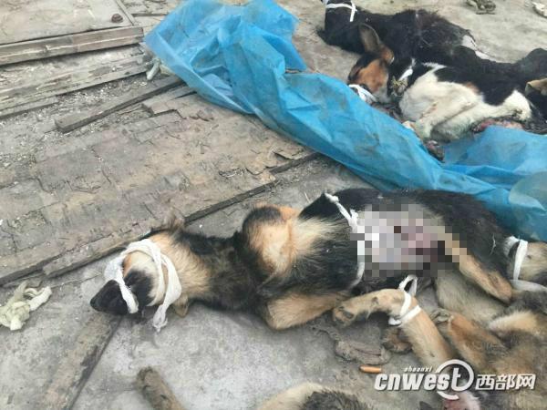 西安一医学院实验用狗疑遭弃工作人员:不得已