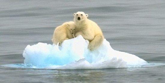 2040年 夏季的北极可能就成为一个无冰的世界
