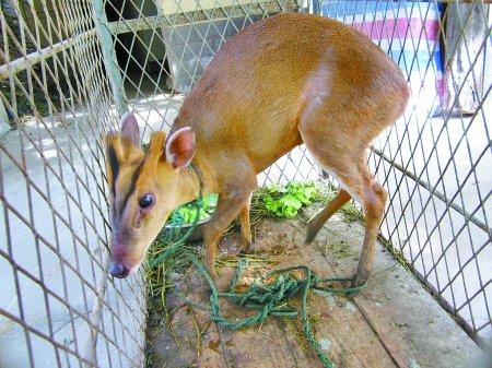村民救助保护动物被咬伤 申请地方补偿遭拒绝