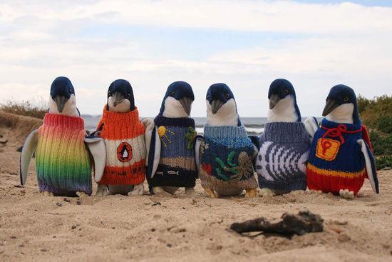 澳大利亚109岁最长寿老人为濒危企鹅织毛衣