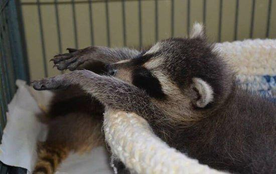 外国网友献爱心 为野生小动物编织毛线窝