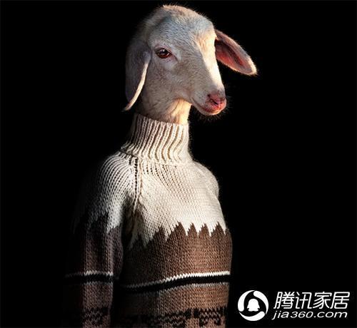 动物们穿上衣服的感觉好怪异