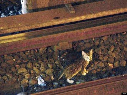 小猫顽皮躲铁轨致纽约地铁停驶90分钟(图)