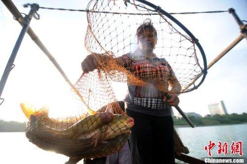 广西食人鱼伤人引发关注 民众担忧外来物种入侵