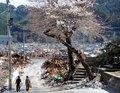 日本地震海啸已确认造成14063人遇难(图)
