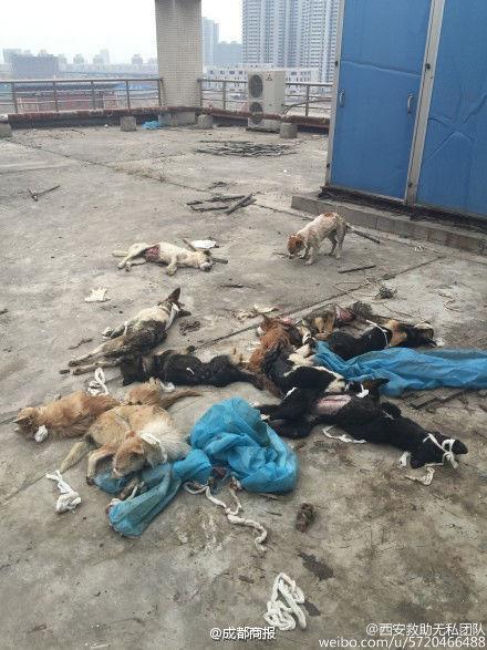 陕西高校疑将狗做实验后遗弃 狗伤口流血抽搐
