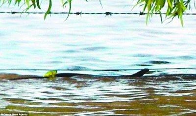 澳洲布里斯班洪灾致26人死 青蛙骑蛇背上逃生