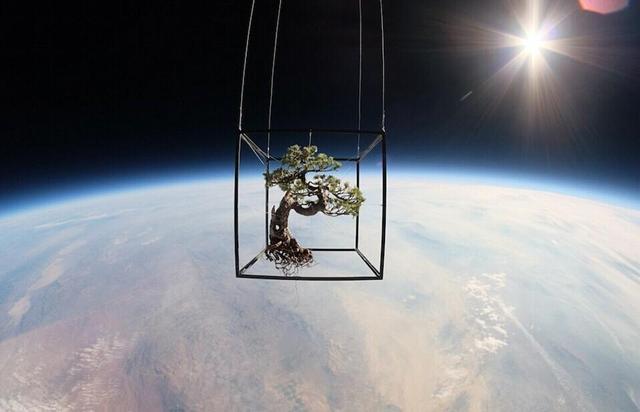 组图:日本艺术家用氦气球将盆栽送上三万米太空
