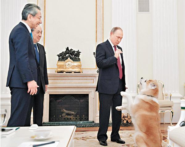 普京带秋田犬见日本记者 狗不停吠场面一度混乱(图)