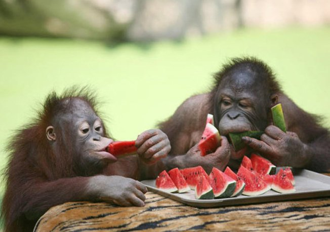 炎炎夏季 衡阳市动物园给动物们开