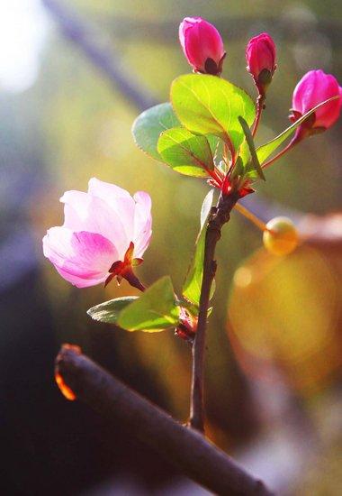 史上最热11月四季花卉同开