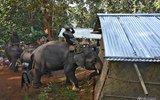 印度警察骑大象拆除违建 老百姓哭成一片