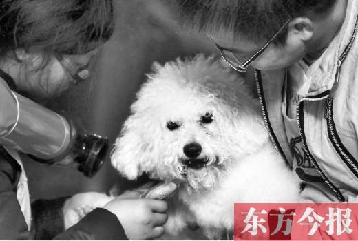 春节宠物寄养贵过幼儿园:住VIP房主人随时观察