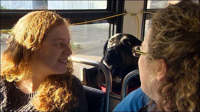 宠物犬嫌主人抽烟太慢 独自搭公车逛公园(图)