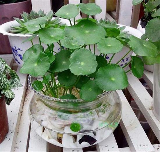 可以在家养的水培植物 格调高雅还好养活