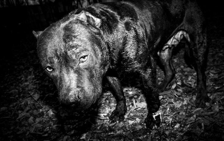 【在线影展】斗犬与狗徒,奴性与人性的极致展现