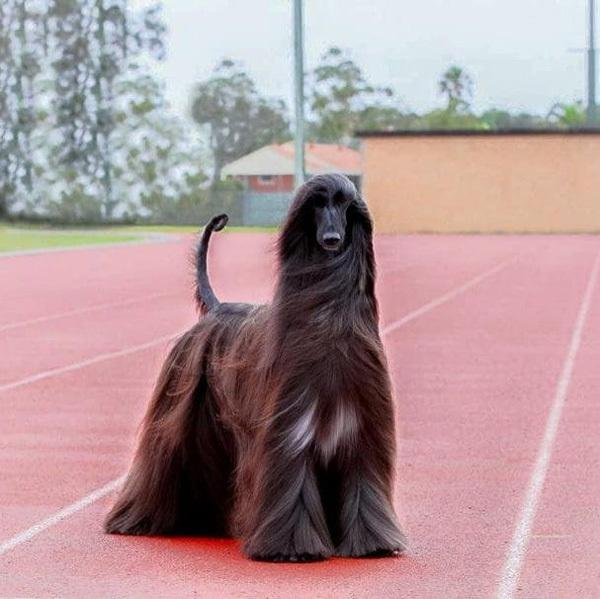 世界上最漂亮的狗长这样