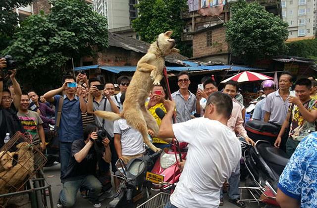 组图:广西玉林狗贩虐狗逼爱狗人士高价买狗