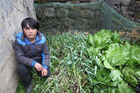 蹲在菜地里的林森,来自www.looklove.org