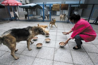 北京朝阳区一疯狗街头咬伤多人 被警方抓获