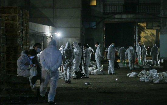 家禽业受H7N9冲击一周损失百亿 行业全线亏损