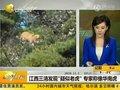 视频:江西三清发现疑似老虎 专家称像华南虎