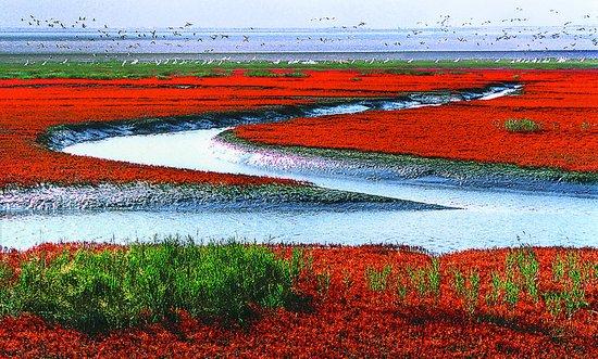 """盘锦——红海滩观景 鸳鸯沟""""打鸟"""""""