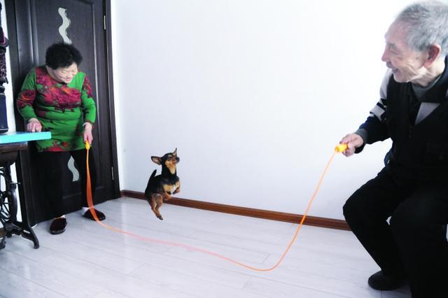 10岁小狗举能5斤重杠铃 跳绳能跳50个(图)